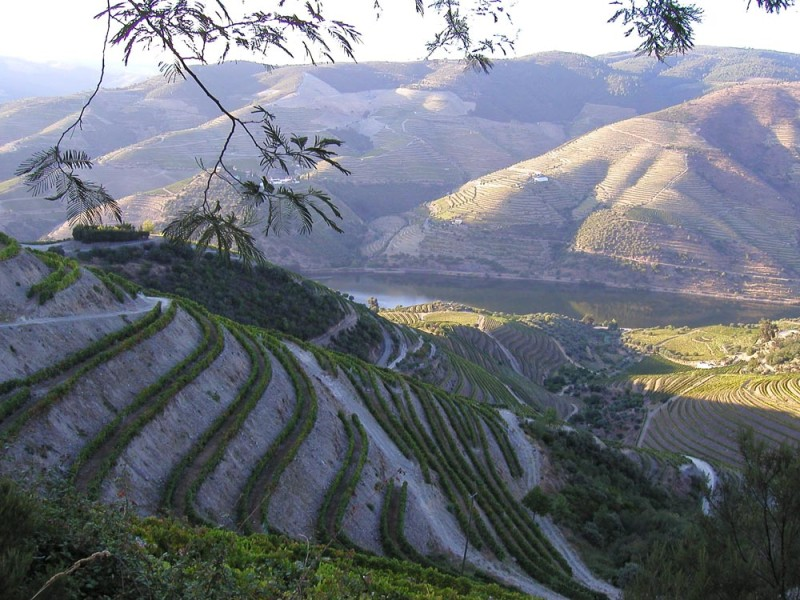 In the 17th century, the English discovered a new style of wine from among the steep vineyards of the Douro Valley.